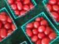 madura-farm-tomatoes
