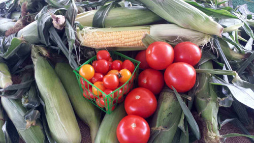 Madura Farms Sweet Corn and Tomatoes
